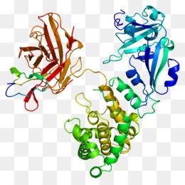 La Estructura Cuaternaria De La Proteína Descarga Gratuita