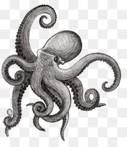 Los Cefalópodos Descarga Gratuita De Png Pulpo Dibujo De Calamar