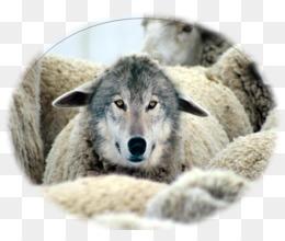 Canis Descarga Gratuita De Png Lobo Vestido De Oveja Leche