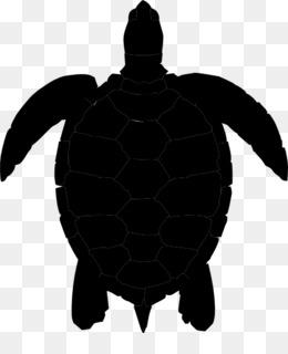 Las Planas De Tortugas Marinas Descarga Gratuita De Png Las