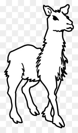 Camello Descarga Gratuita De Png Alpaca Llama T Shirt Libro Para