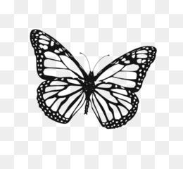 Mariposa Monarca Libro Para Colorear Imagen De Oruga Contornos Png